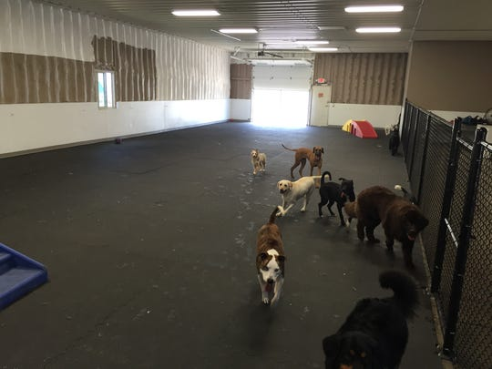 Dogs play in the day care space at Precious Pets.