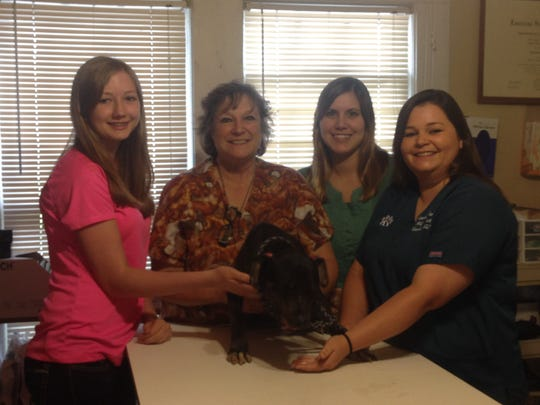 Staff members at Catahoula Veterinary Clinic are shown with Sweet Luck, an abandoned dog that is being nursed back to health at the Jonesville clinic. From left are Taylor Bignar, veterinarian Dr. Kelly Hudspeth, Kimberly Bass and Kelly B. Meyers.
