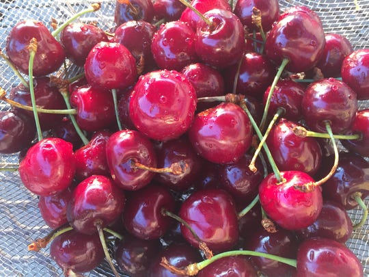 Cherries are in season at some local farms.