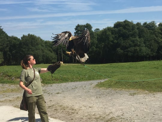 Visitors to nature conservancy Eagles Flying can watch