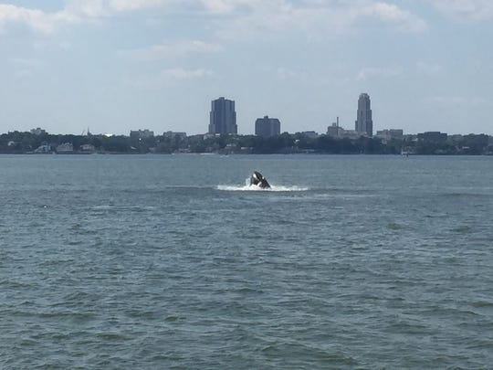 A humpback whale was spotted off New Rochelle in the Long Island Sound on Thursday.