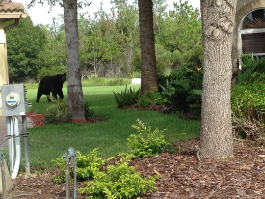 Roaming this morning on Canalo Court in Bella Terra.