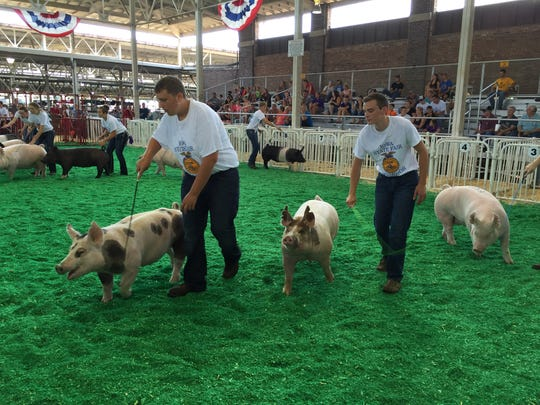 Michael DeDecker of Altoona, right, puts his pig Chip through the paces during FFA showmanship competition at the Iowa State Fair. DeDecker is Polk County Fair King, but you wouldn't know it at the State Fair.