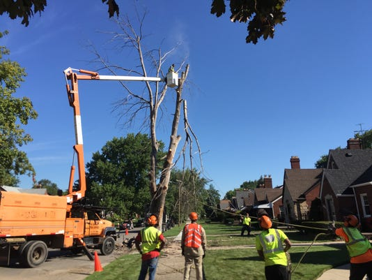 Detroit to cut down thousands of dead trees