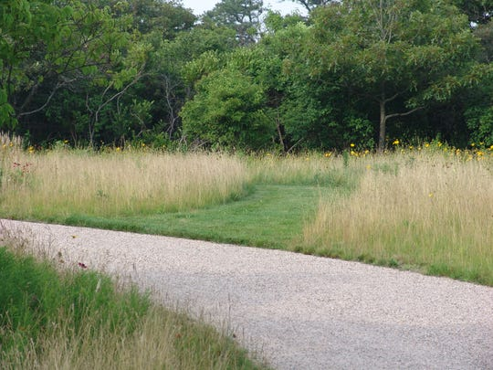A mowed path allows easy entrance to a meadow and emphasizes how it's growing.