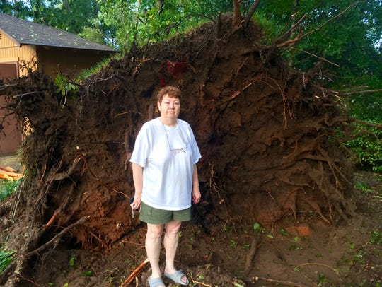 A root ball 18 feet in diameter remained after Hermine