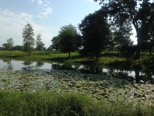 The pond on Mahaffey Farms.