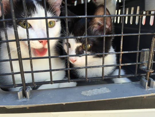 These kittens may soon have new families thanks to