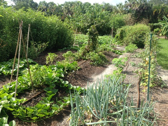 Neat rows of herbs and vegetables at the organic farm
