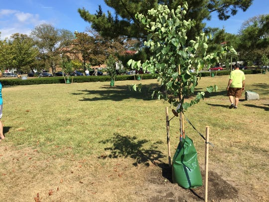 A flowering tree stands in Library Park in honor of