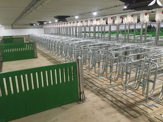These breeding stalls are designed to hold sows and gilts for a few hours to be bred. Then the backs of the stalls are opened to allow the animals to move around within breeding group pen.