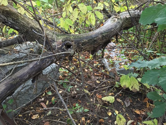 A fallen tree has toppled a headstone at the Clarke Cemetery in China Township.