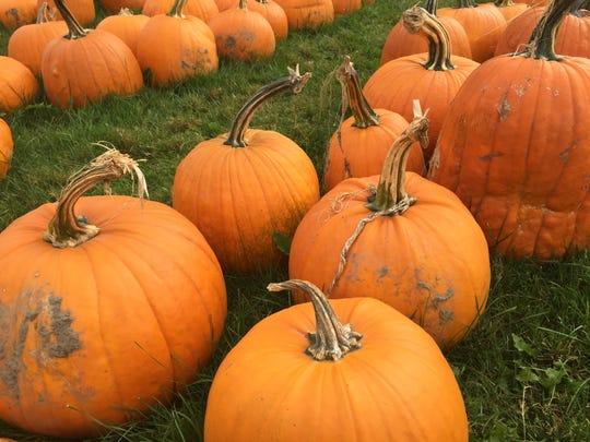Pumpkins line the front yard of Conant's Riverside