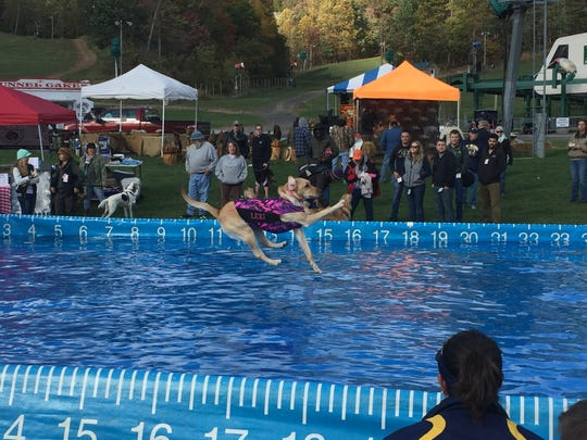 Lexi, a yellow lab jumps into a pool to record a distance during the DockDogs event at the Whitetail Great Outdoors Festival Saturday.