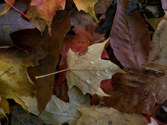 636132690554259383-leaf2.jpg