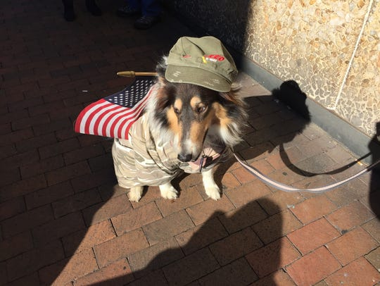 Sammi the dog watches the Veteran's Day Parade on Beverley