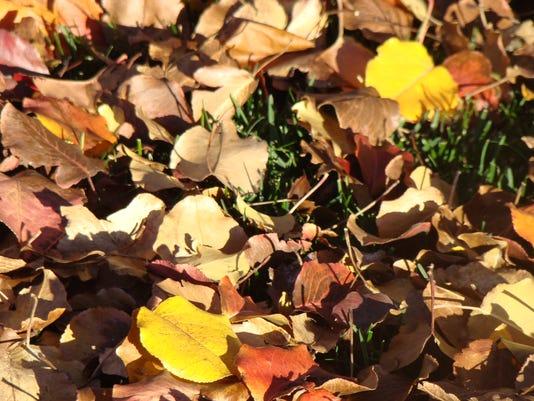636144287371650921-Fall-leaves-by-Wendy-Hanson-Mazet.jpg