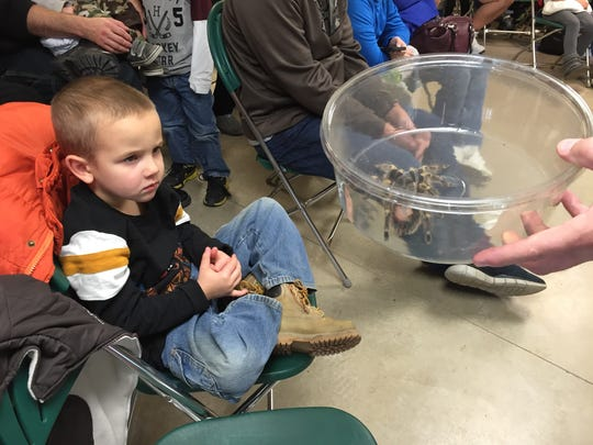 Garret Whitenight, 4, gets up close with a tarantula held by Dan Briere.