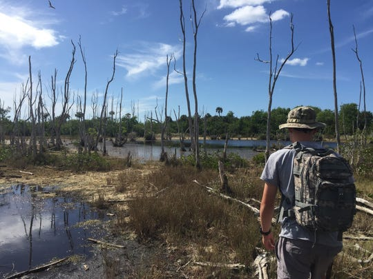 Nash makees his way past the skeletal remains  of melaleuca in search of saltwater