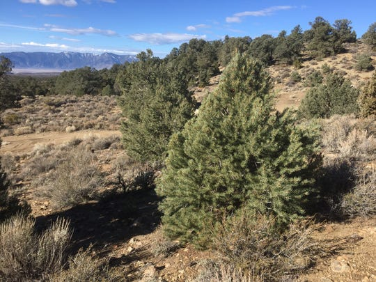 Public lands remain open during the COVID-19 outbreak, but the Bureau of Land Management is closing its offices and visitor centers indefinitely, BLM officials announced March 30.
