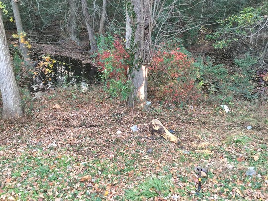 The tree the van struck on Nov. 26, 2016