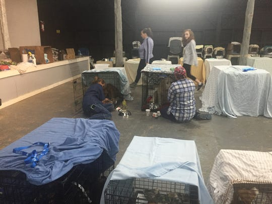A makeshift shelter in Sevier County houses animals