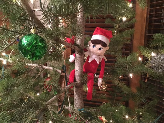 The Elf is hiding in a tree,