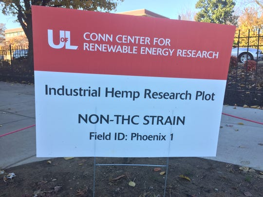 The test plot of hemp at U of L's Conn Center informed