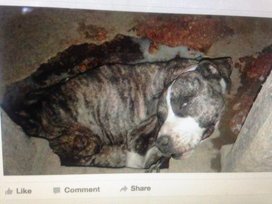 A Parksley man was arrested and charged with animal cruelty on Jan. 11 after a photograph of a dead dog appeared on Facebook.