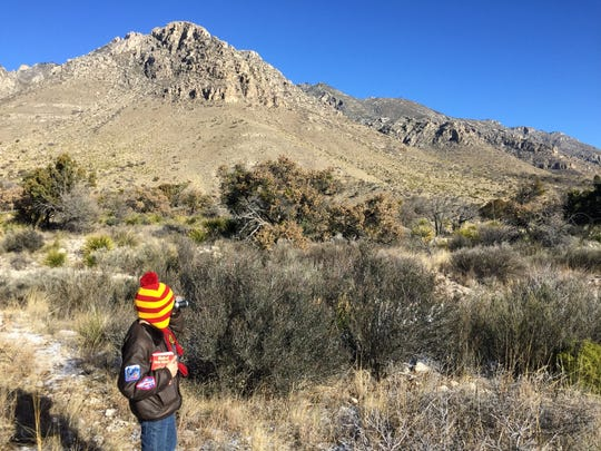Fourth grader Robby McIntire searches for birds during the second annual Children's Bird Count on Saturday.