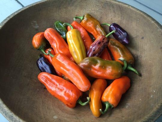 Pippin's Golden Honey Pepper is an heirloom variety