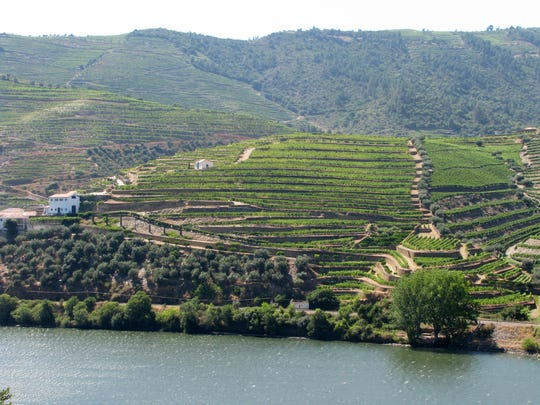 The terraced vineyard of Quinta Boa Vista along the Douro river in Portugal. Such mountain-hugging terraced vineyards produce port, one of the most recognizable wines in the world and the nation's most visible export.