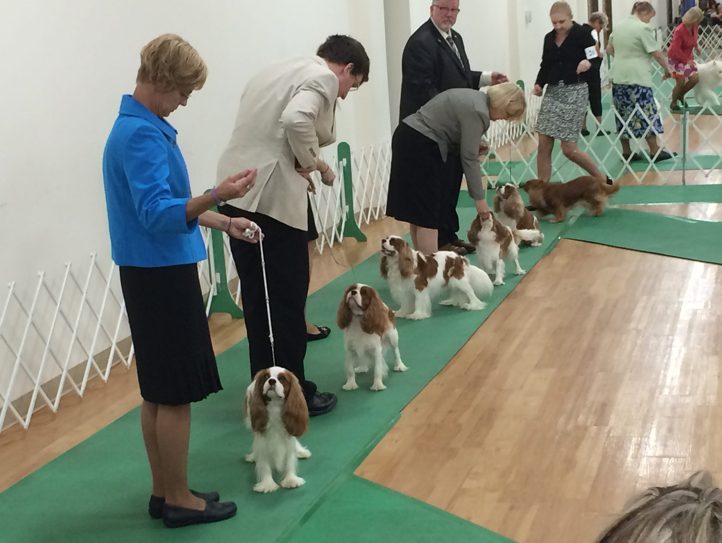 Dogs from the the Cavalier King Charles Spaniel group