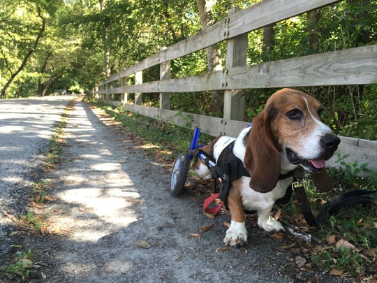 Charlie takes a break along the Monon Trail.