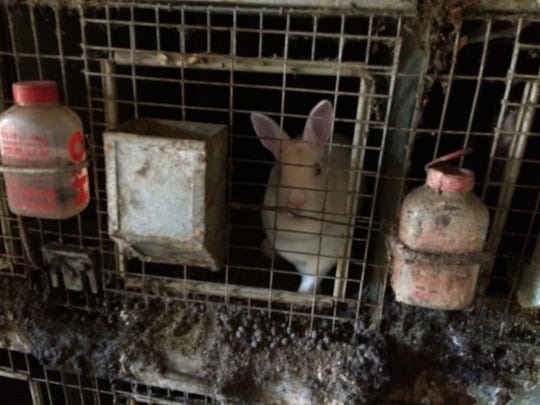 Authorities rescued 41 rabbits from a home on Augusta Drive off San Juan Grade Road last week.