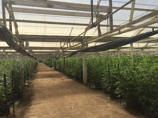 Greenhouse in Salinas