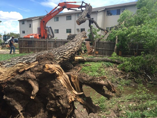 A section of this large cottonwood fell on two vehicles at 2628 Redwing Road and barely missed an apartment complex.