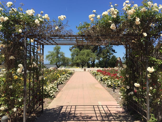The rose garden at the Olivas Adobe in Ventura acts