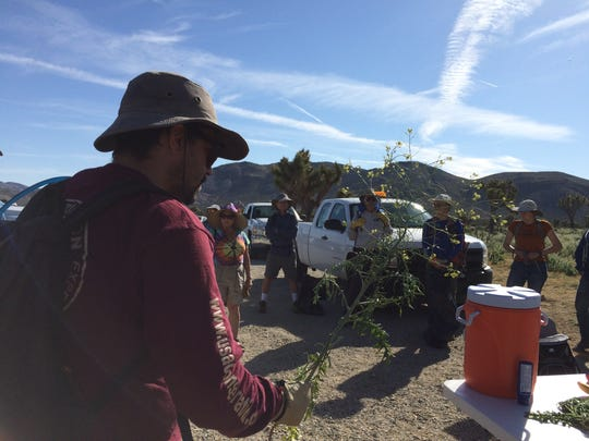 Colin Barrows, conservation coordinator with Friends of the Desert Mountains, shows Weed Warriors volunteers a tumble mustard plant. The volunteers fanned out across Keys View and pulled nearly 2,000 pounds of tumble mustard over about four hours on April 22, 2017.