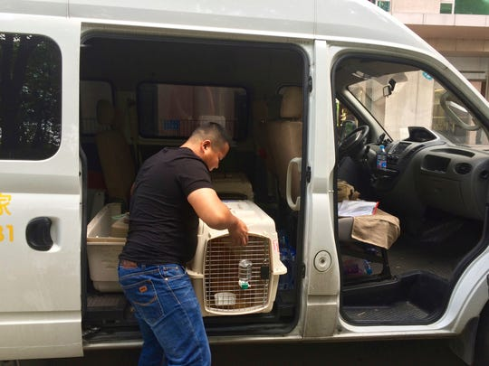 This May 2016 photo provided by veterinarian Julia Langfitt shows an employee with WorldCare Pet loading a pet carrier into a van to transport a cat to the airport in Shanghai, China. Owners can hire a pet relocation company to handle flights, immunizations and even a pet's immigration into a new country, but costs for door-to-door service can be expensive. (Julia Langfitt via AP)