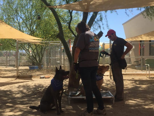 Palm Springs Animal Shelter volunteers work with dogs