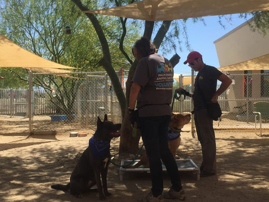 Palm Springs Animal Shelter volunteers work with dogs from the shelter at a recent training class. The volunteers are helping teach the dogs to pay attention to their person, not get distracted by their surroundings.
