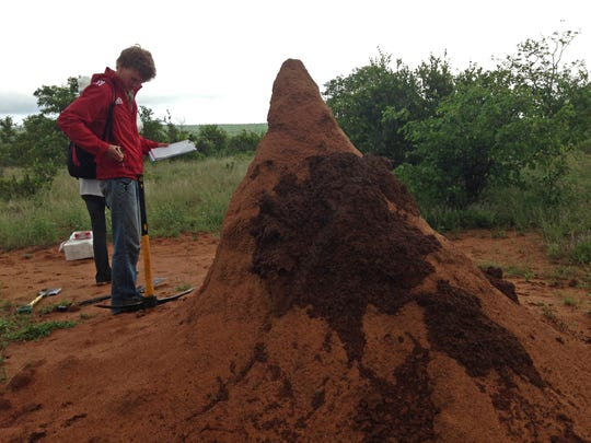New Mexico State University Plant and Environmental Sciences doctoral student Brianna Lind is using satellite imagery to study the ecosystem effects of large termite mounds in West Africa. One of her field assistants, Brady Ross, is seen here inspecting a termite mound at Kruger National Park during a study abroad trip to South Africa.