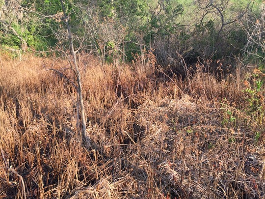 Officials said dead vegetation was a sign of the brine