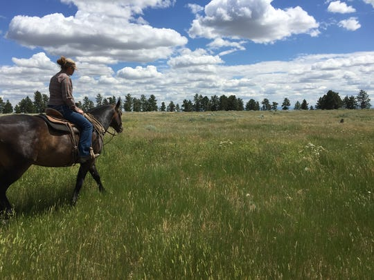 Sarah Kinkelarr was checking fence in the Dog Creek area 25 miles north of Winifred Friday. Some of the land she ranches with her husband falls within the monument. She welcomes the Trump administration's review of the monument.