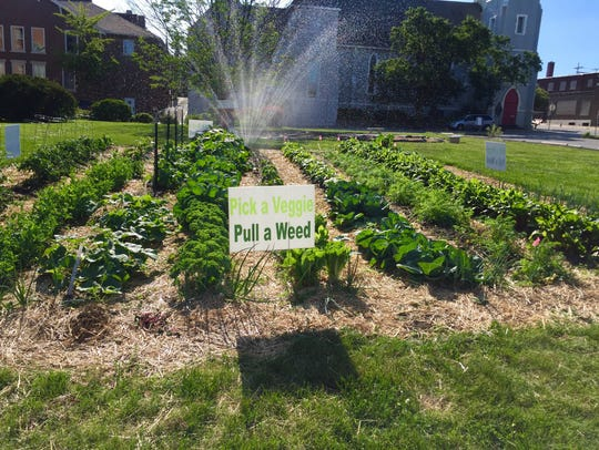 A sharing garden sits at the corner of 6th St. and
