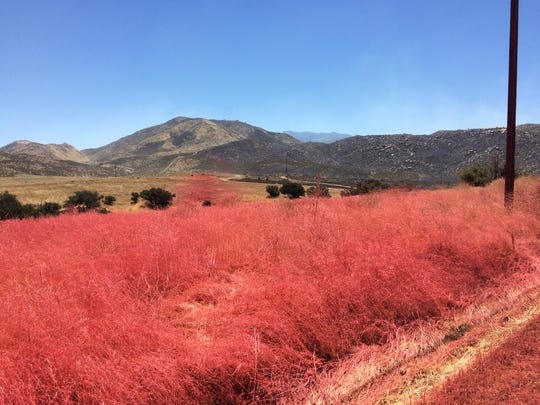 Retardant is seen June 27, 2017, in a scorched area of the Manzanita Fire. The fire burned through thick vegetation south of Beaumont and fire officials say conditions make this fire season one of the worse in recent memory.