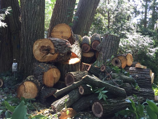 """The remains of a large basswood tree are piled behind Elaine Kristelis' East Lansing home on Friday, June 30, 2017. Kristelis is upset by the Lansing Board of Water & Light's """"aggressive"""" tree trimming and the wood crews left behind."""