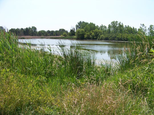 Pointe Mouillee State Game Area is one of the largest freshwater marsh restoration projects in North America and is composed of 4,040 acres of cattail marsh, field, coastal wetlands and forest.