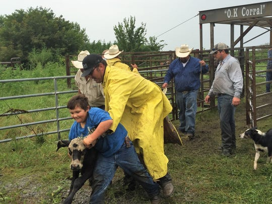 Luke Clement, 8, of Sweet Lake, Louisiana, wrestles a calf onto a trailer in Cameron Parish Aug. 25, 2017. The cattle are being brought north as Hurricane Harvey approaches the coast.